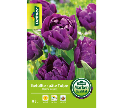 Dehner Blumenzwiebel Gefüllte späte Tulpe 'Negrita Double'