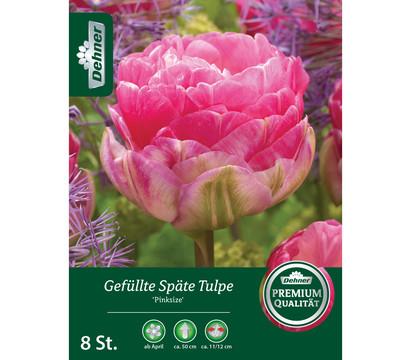 Dehner Blumenzwiebel Gefüllte Späte Tulpe 'Pinksize'