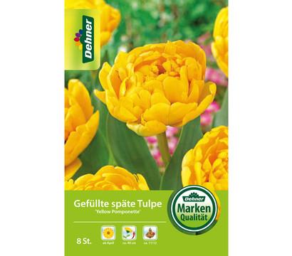 Dehner Blumenzwiebel Gefüllte späte Tulpe 'Yellow Pomponette'