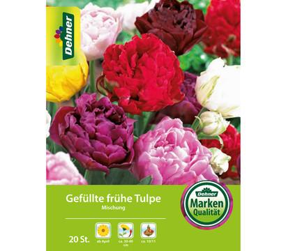 Dehner Blumenzwiebel Gefüllte Tulpe 'Mischung'