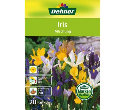 Dehner Blumenzwiebel Iris 'Mischung'