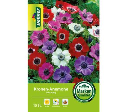 Dehner Blumenzwiebel Kronen-Anemone Mischung