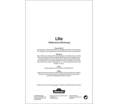 dehner blumenzwiebel lilie 39 midcentury mischung 39 dehner. Black Bedroom Furniture Sets. Home Design Ideas