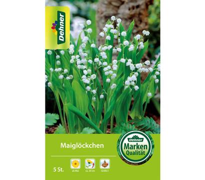 Dehner Blumenzwiebel Maiglöckchen