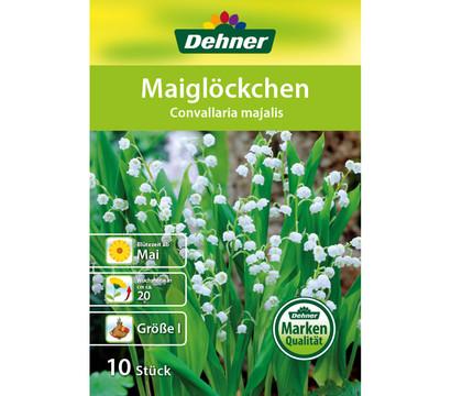 Dehner Blumenzwiebel Maiglöckchen 'Convallaria majalis'