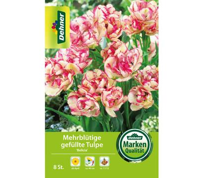 Dehner Blumenzwiebel Mehrblütige gefüllte Tulpe 'Belicia'