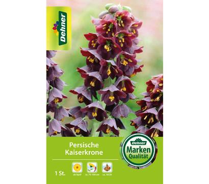 Dehner Blumenzwiebel Persische Kaiserkrone