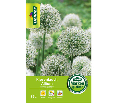 Dehner Blumenzwiebel Riesenlauch Allium 'Mount Everest'