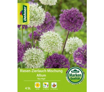 Dehner Blumenzwiebel Riesen-Zierlauch Mischung Allium 'Sky High'