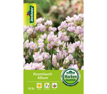 Dehner Blumenzwiebel Rosenlauch Allium