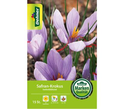 Dehner Blumenzwiebel Safran-Krokus herbstblühend