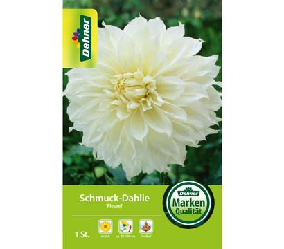 Dehner Blumenzwiebel Schmuck-Dahlie 'Fleurel'