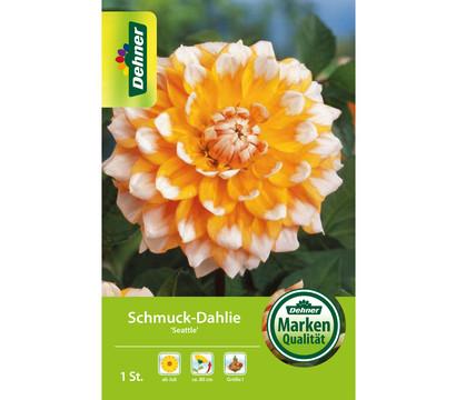 Dehner Blumenzwiebel Schmuck-Dahlie 'Seattle'