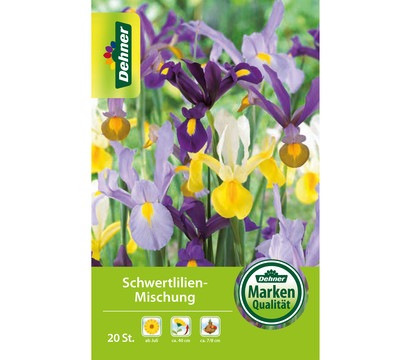 Dehner Blumenzwiebel Schwertlilien-Mischung