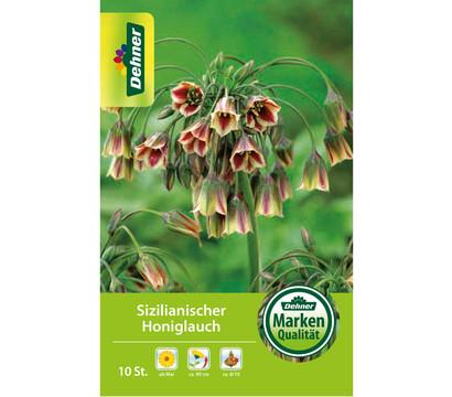 Dehner Blumenzwiebel Sizilianischer Honiglauch