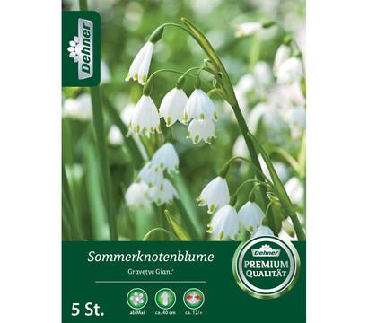 Dehner Blumenzwiebel Sommerknotenblume 'Gravetye Giant'