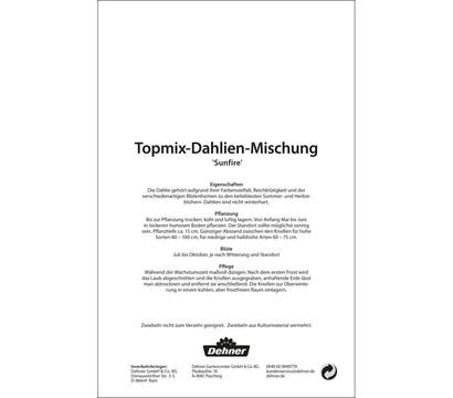 dehner blumenzwiebel topmix dahlie 39 sunfire 39 dehner. Black Bedroom Furniture Sets. Home Design Ideas