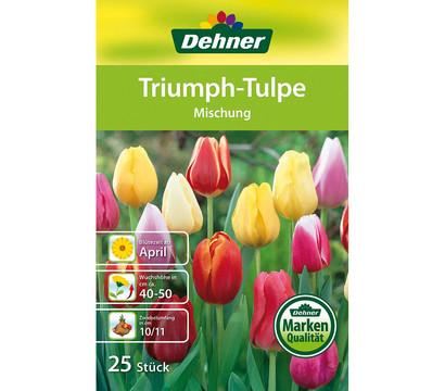 Dehner Blumenzwiebel Triumph-Tulpe \'Mischung\' : Dehner Garten Center