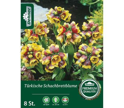 Dehner Blumenzwiebel Türkische Schachbrettblume