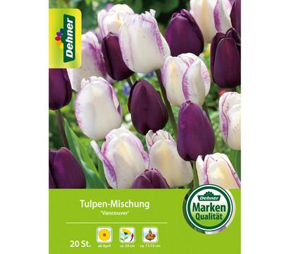 Dehner Blumenzwiebel Tulpen-Mischung 'Vancouver'