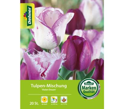 Dehner Blumenzwiebel Tulpen-Mischung 'Violet Dream'