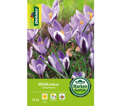 Dehner Blumenzwiebel Wildkrokus 'Spring Beauty'