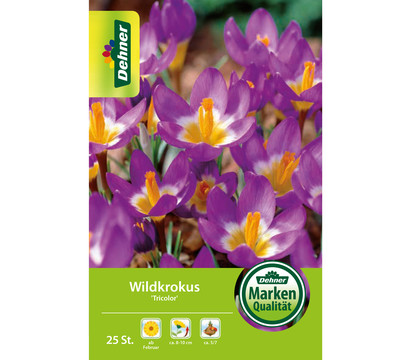 Dehner Blumenzwiebel Wildkrokus 'Tricolor'
