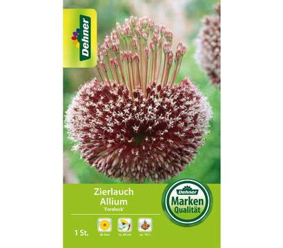 Dehner Blumenzwiebel Zierlauch Allium 'Forelock'