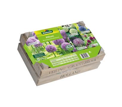 Dehner Blumenzwiebel-Mischung Allium