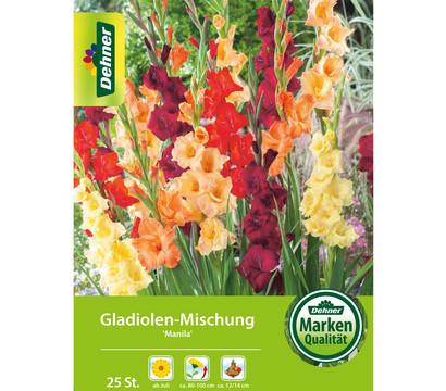 Dehner Blumenzwiebeln Gladiolen-Mischung 'Manila'