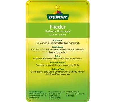 dehner flieder 39 katharine havemeyer 39 dehner garten center. Black Bedroom Furniture Sets. Home Design Ideas