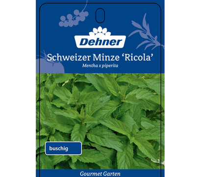dehner gourmet garten schweizer minze 39 ricola 39 dehner garten center. Black Bedroom Furniture Sets. Home Design Ideas