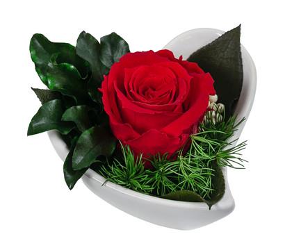Dehner Herzschale mit Longlife-Rose 'Aneta'
