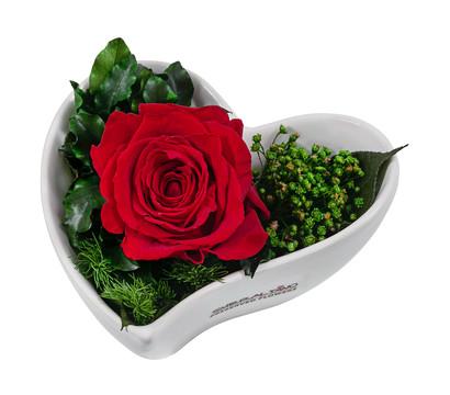 Dehner Herzschale mit Longlife-Rose 'Lena'