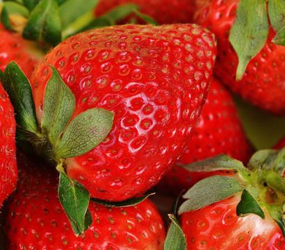 Dehner Kids Erdbeere 'Ostara'