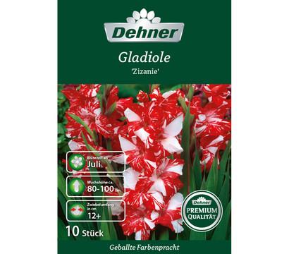 dehner premium blumenzwiebel gladiole 39 zizanie 39 dehner. Black Bedroom Furniture Sets. Home Design Ideas