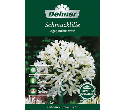 dehner premium blumenzwiebel schmucklilie 39 agapanthus wei. Black Bedroom Furniture Sets. Home Design Ideas