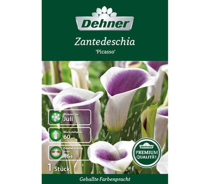 dehner premium blumenzwiebel zantedeschia 39 picasso 39 dehner garten center. Black Bedroom Furniture Sets. Home Design Ideas
