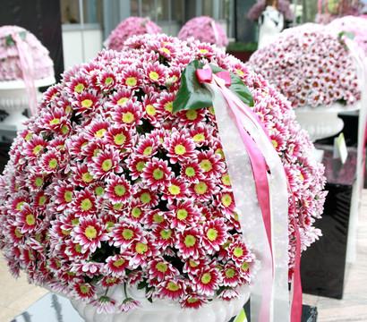 dehner premium chrysantheme 39 ciao improve 39 dehner garten center. Black Bedroom Furniture Sets. Home Design Ideas