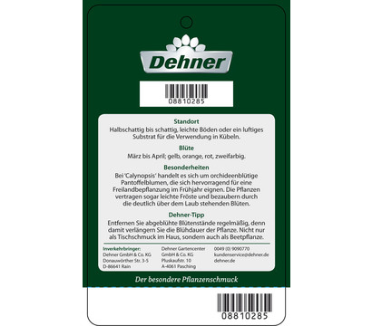 dehner premium pantoffelblume 39 calynopsis 39 dehner garten. Black Bedroom Furniture Sets. Home Design Ideas