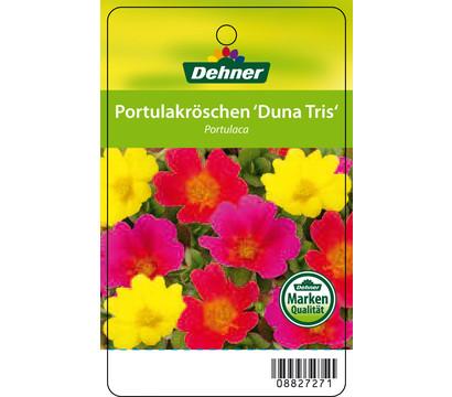 dehner premium portulakr schen 39 duna tris 39 dehner garten. Black Bedroom Furniture Sets. Home Design Ideas