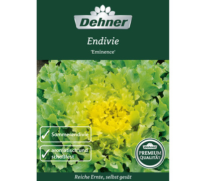 Dehner Premium Samen Endivien 'Eminence'