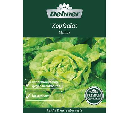 Dehner Premium Samen Kopfsalat 'Matilda'
