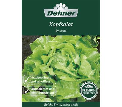 Dehner Premium Samen Kopfsalat 'Sylvesta'