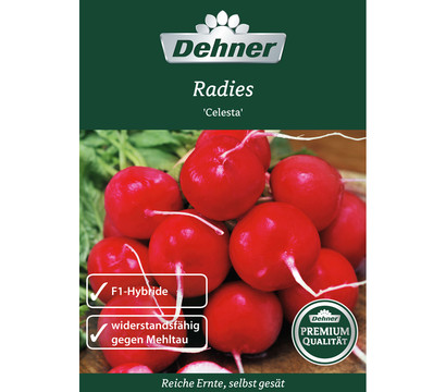 Dehner Premium Samen Radies 'Celesta'