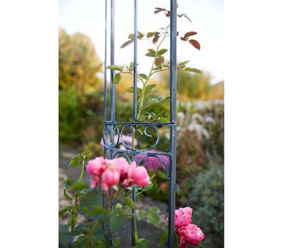 dehner rosenbogen alina dehner garten center. Black Bedroom Furniture Sets. Home Design Ideas