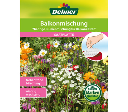 Dehner Saatplatte Balkonmischung 'Niedrige Blumenmischung'