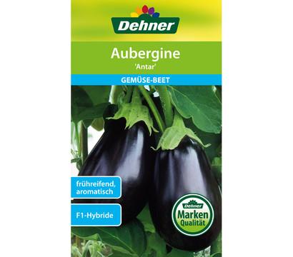Dehner Samen Aubergine 'Antar'