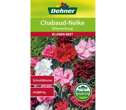 Dehner Samen Chabaud-Nelke 'Elitemischung'