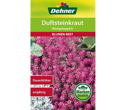 Dehner Samen Duftsteinkraut 'Königsteppich'